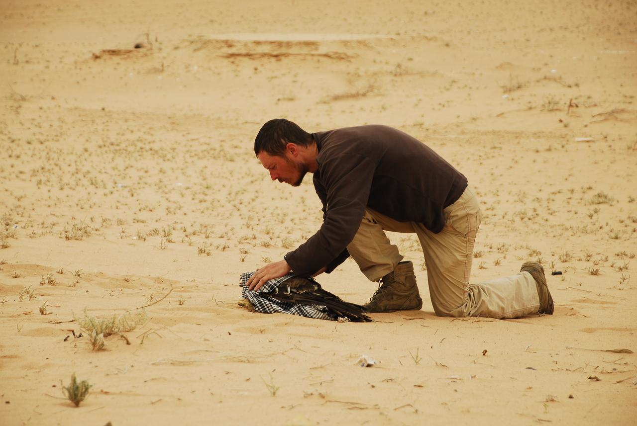 Łukasz Tulej chwytający rannego orła cesarskiego - Wadi Araba, Jordania. Fot. N. Skrzyński